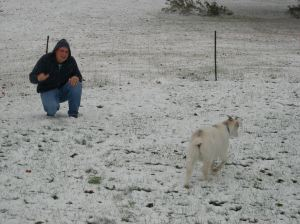 Goats' first experience with the snow