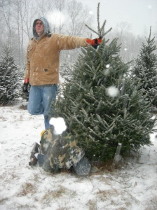 Cutting down the tree